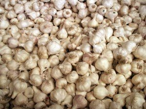 Garlic_Raw Juicing and Detox